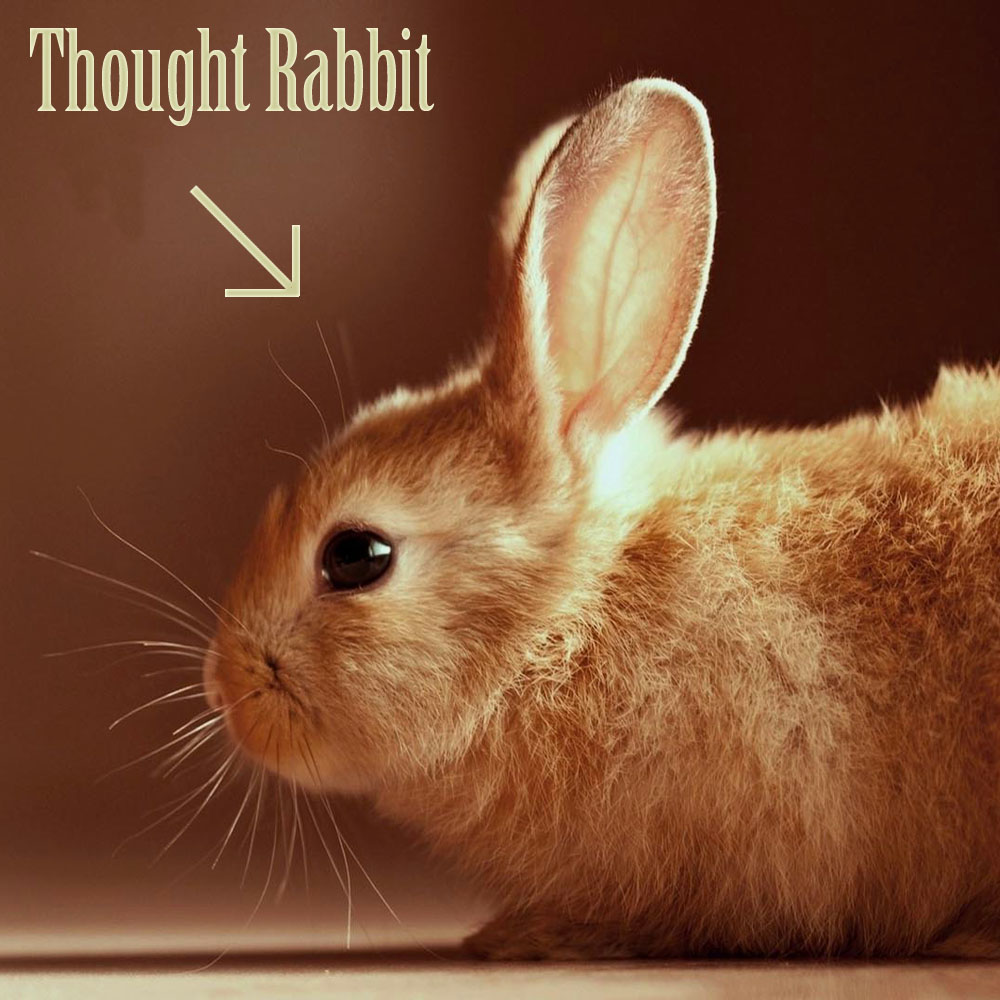 Thought Rabbit